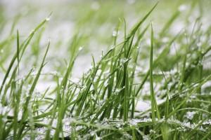 grass-1877142_1280