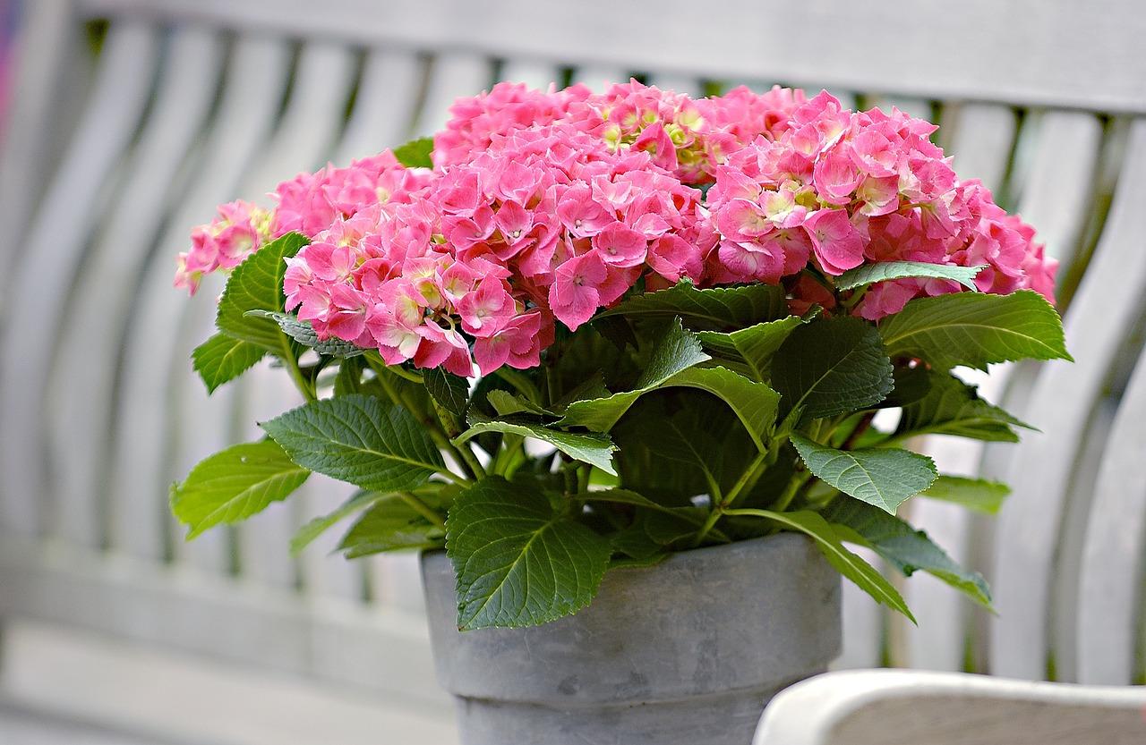 останкино теплица купить комнатные цветы в горшках