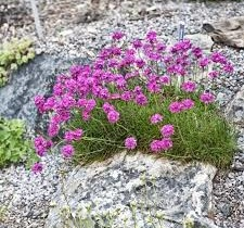 Когда и как высаживать растения на альпийскую горку?