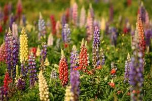быстрорастущие растения фото описание смотреть