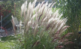 Зачем в саду высаживать декоративные травы?