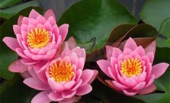 9 лучших водных растений сезона Весна 2015…