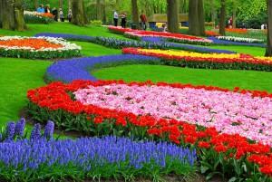 Парад цветов в Голландии