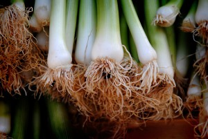 onions-1977261_960_720