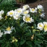 Как подобрать растения для весеннего цветника?