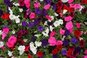 Уголок отдыха, утопающий в цветах фото описание смотркть