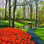 Приглашаем посетить самый цветочный сад в мире «Койкенкоф» (Нидерланды)