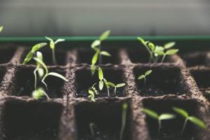 plant-1474807_960_720