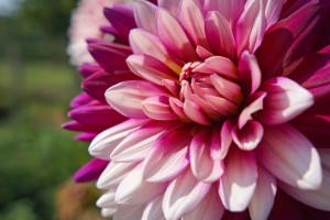июль садово-огородные работы фото описание смотреть