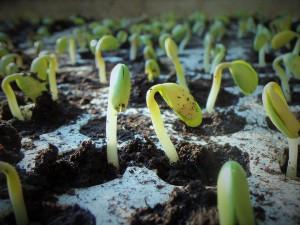 plants-1331667_960_720