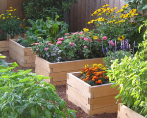 raised_beds-garden
