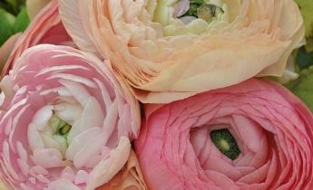 Урок 3 — Летнецветущие луковичные и клубневые растения…