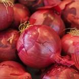 Голландский лук-севок для вашего огорода…