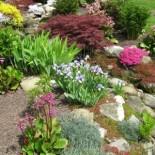 Многолетние цветы для альпийской горки