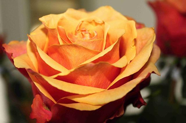 20 самых ароматных цветов для вашего сада