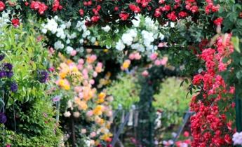 Топ 8 лучших питомников роз в мире
