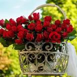 Немецкие розы Тантау
