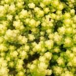 Топ лучших низкорослых растений, которые не требуют ухода…