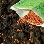 Как купить семена овощей: 5 важных советов для начинающих и не только