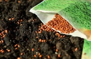 семена овощей фото, описание, смотреть