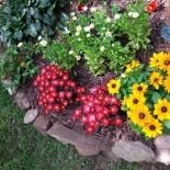 Какими растениями украсить городской палисадник?