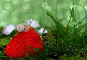 snail-582205_960_720