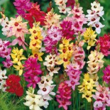 Луковичные растения: Новинки из каталога Весна 2016…