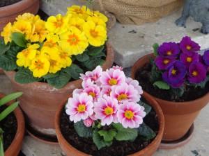 spring-712571_960_720