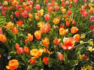 spring-flowers-110862_960_720