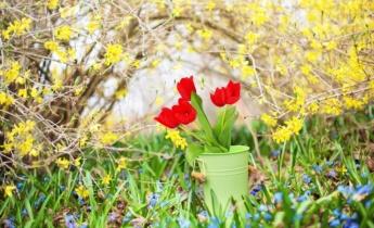 Весеннецветущие луковичные цветы. Кратко о главном