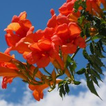 Урок 16 – Лианы в саду