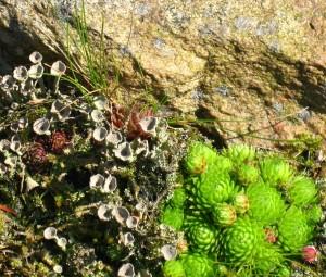 stone-garden-474207_1280