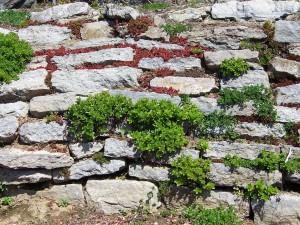 stonewall-17829_960_720