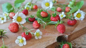 strawberries-1463806_960_720