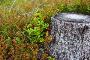 stump-1648566_1280