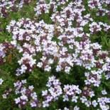 Когда собирать и как сушить лекарственные травы?