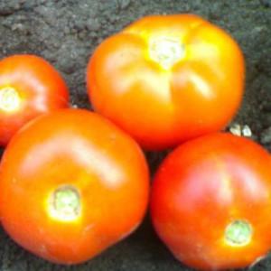 tomato-veselka-1