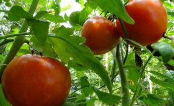 Урок 5 ̶ Овощи и зеленьиз собственного огорода…