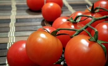 Все о выращивании томатов…