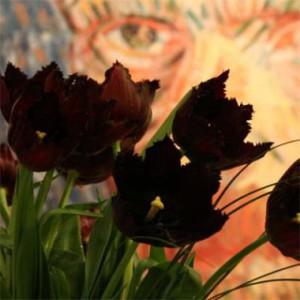 tulip-vincent-van-gogh