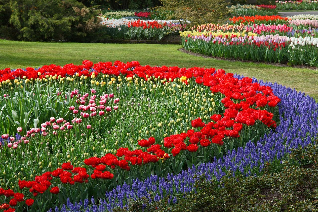 Многолетние низкорослые цветы для бордюра фото и названия