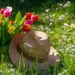 О чем надо помнить садоводу в апреле