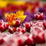 Советы по созданию цветников…