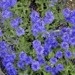 Почвопокровные растения, которые подойдут для любого места в саду…