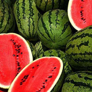 watermelon-holodok-2