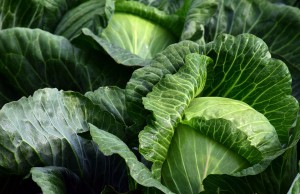 white-cabbage-2747316_960_720