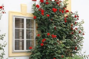 window-1377411_960_720