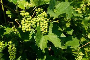 wine-2507615_960_720